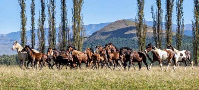 Horses 1 (Large)
