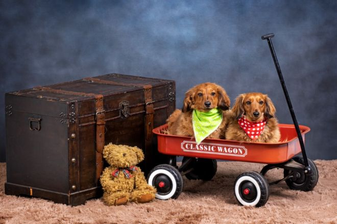 Robbie_Aspeling_Pet_photography_dogs