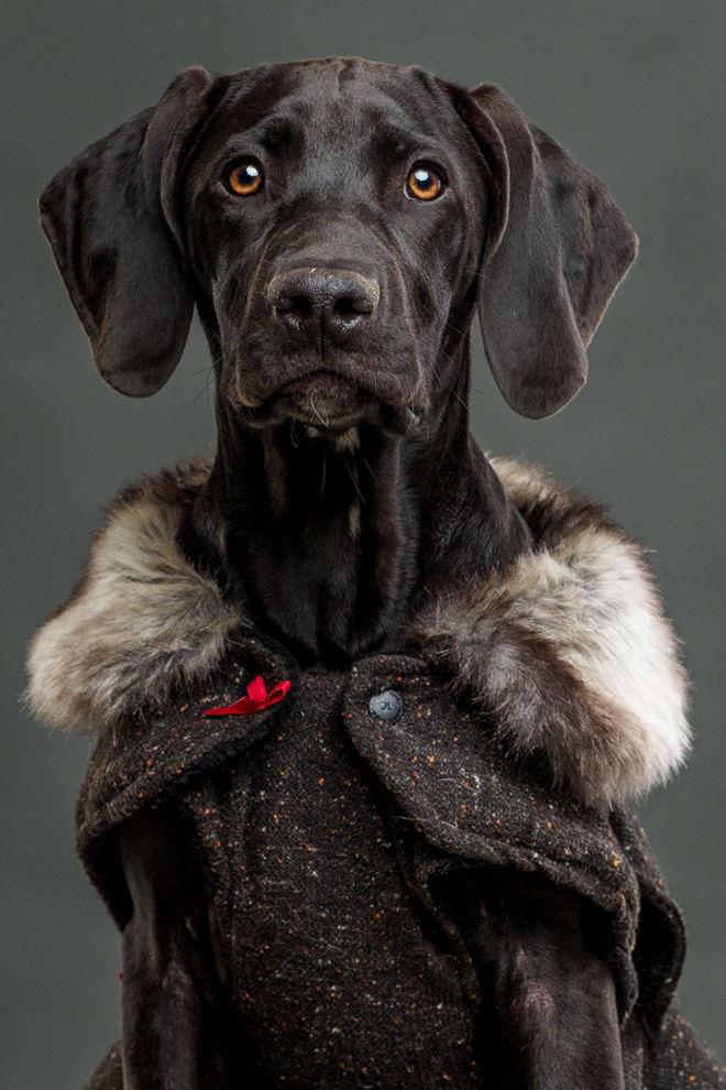 Robbie Aspeling_Pet Portrait_South Africa